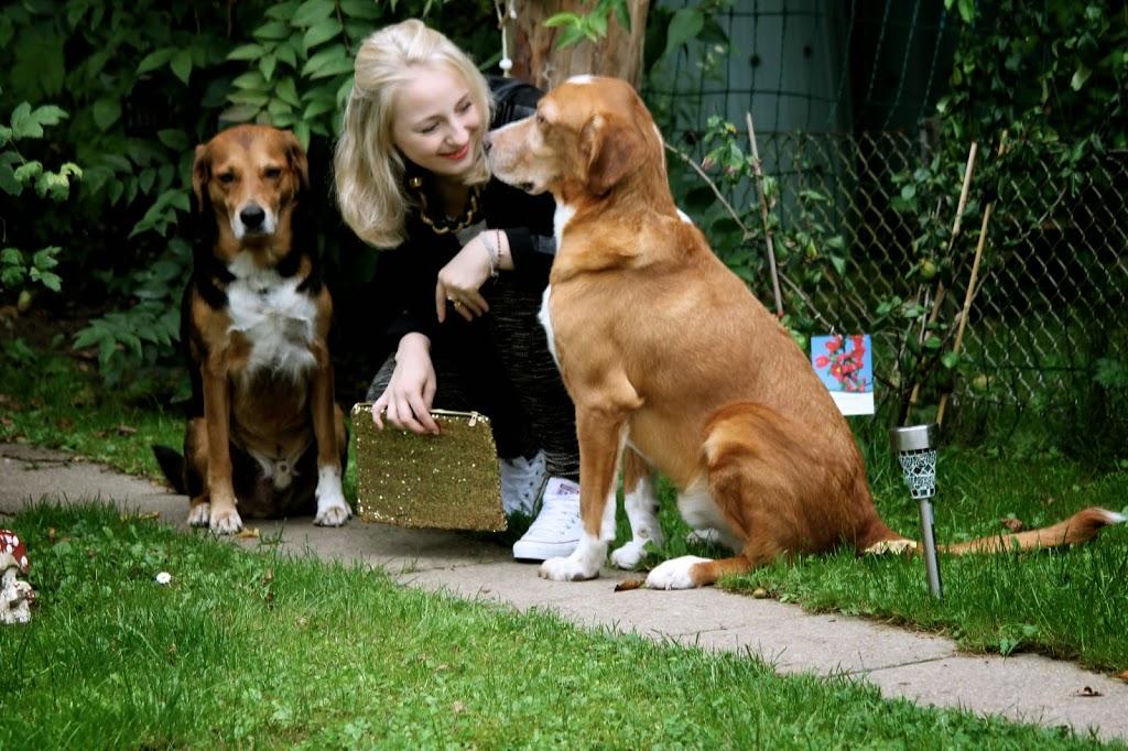 tierhilfe korfu hunde
