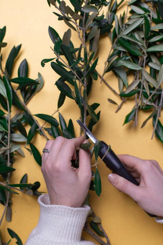 Olivenkranz Olivenzweige schneiden